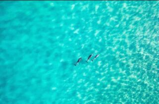 We aren't the only ones out there 🌊  And sometimes we get lucky. You might get to meet some of the dolphins and/or seals in one of your surf lessons. A truly unique memory that you most likely will never forget. 🐬  #explorevictoria #visitvictoria #tourismvictoria #torquay #surfcoast #lorne #visitgreatoceanroad #barwonheads #visittorquay #parksvictoria #torquaybeach #destinationsurfcoast #surfing #surflife #surfboard #surfinglife #surfphotography #surfsup #surfer #waves #ocean #swell #thisisqueensland #visitqueensland #brisbane #discoverqueensland #qld #qldparks #travelqueensland #australia